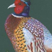 Percival Pheasant
