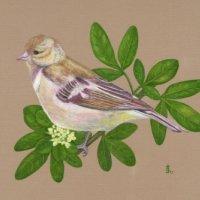Serena Sparrow