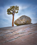 tree and boulder