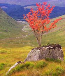 Red Rowan Glen
