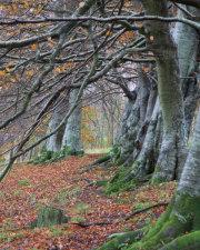 Gullet Wood