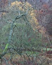 Gullet Wood 4