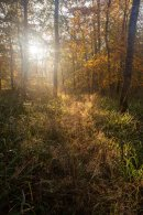 Autumn Light 2