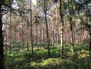 Norfolk Woods