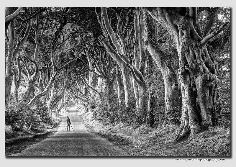The-Dark-Hedges-Photographer-B&W---1k--W5D33790