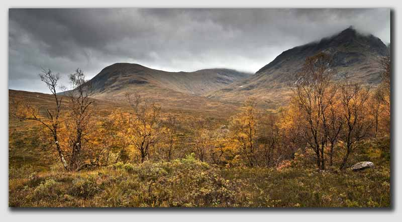Rannoch Moor - Autumn Trees - SCS1618