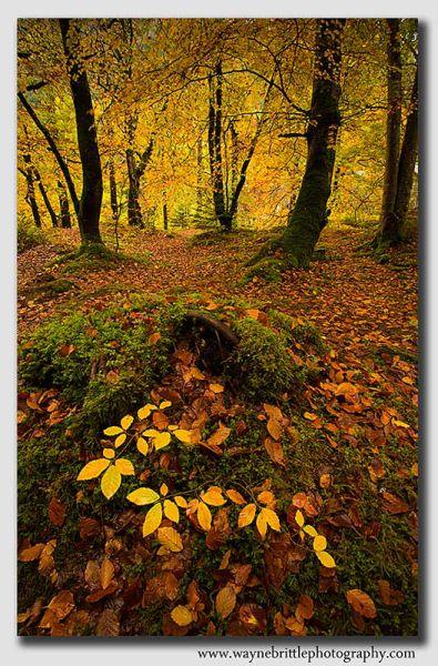 Autumn-Woodland---Loch-Ness---W5D39306