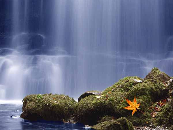 Autumn Falls  -  YS010