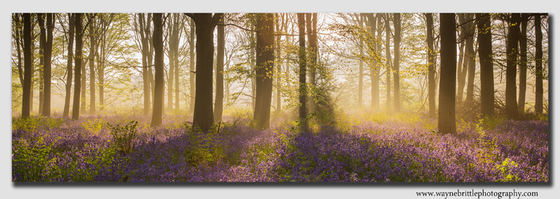 Bluebell-Light-Pano