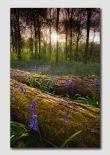 Blueball Wood - D5750