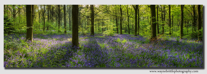 Bluebells-Woodlnd-Floor-Pan3
