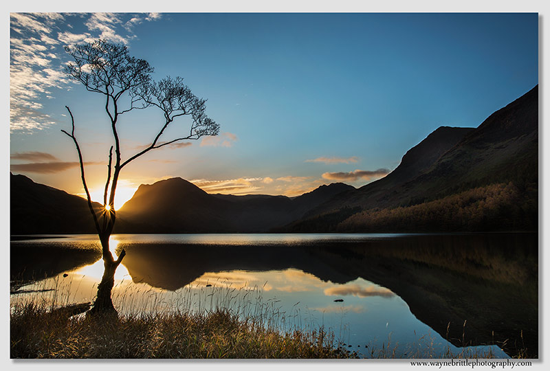 Buttermere Tree at Dawn 2