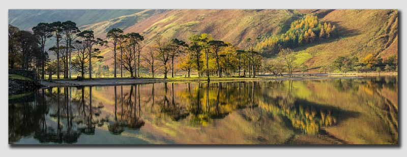 Lakeland Autumn Tree Panorama