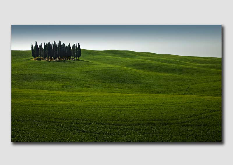 Cypress Tree 'Copse'-3-TU0624