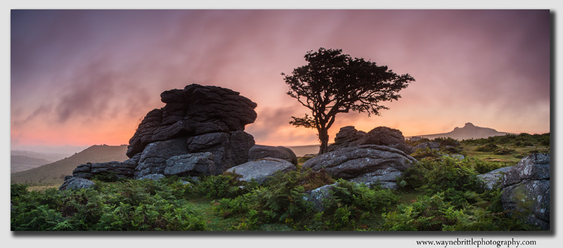 Holwell Tor at Dawn -  Panorama