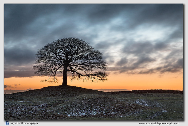 'The Tree' around Sunrise