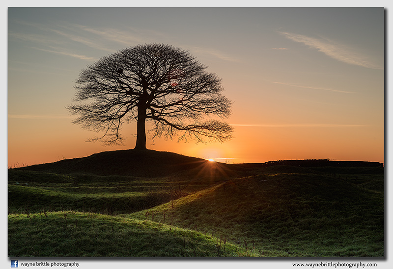 'The Tree' at Sunrise