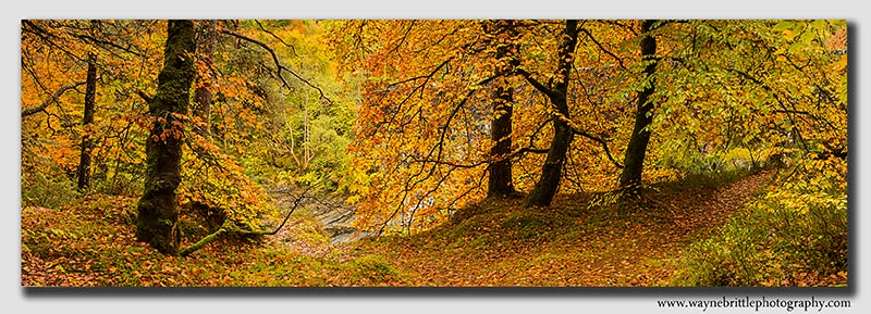 Scottish Highland - Autumn Panorama