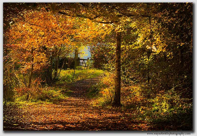 Autumn Gate - Peak District