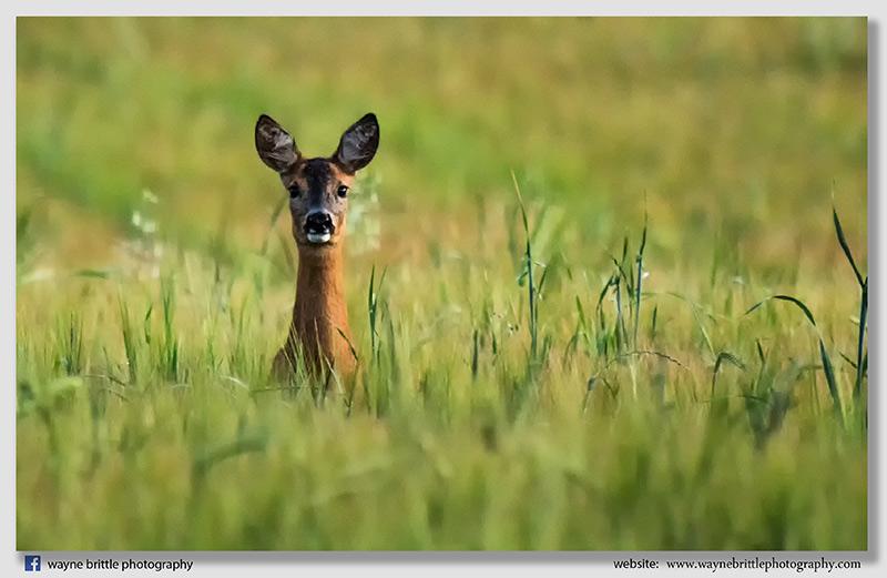 Watching Me - 5DSR0793