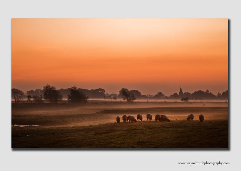 Sheep in the morning mist - DS1232