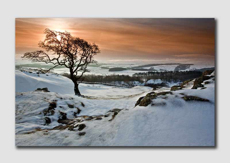 Winter Tree near Hadrians Wall - Northumberland NS8196