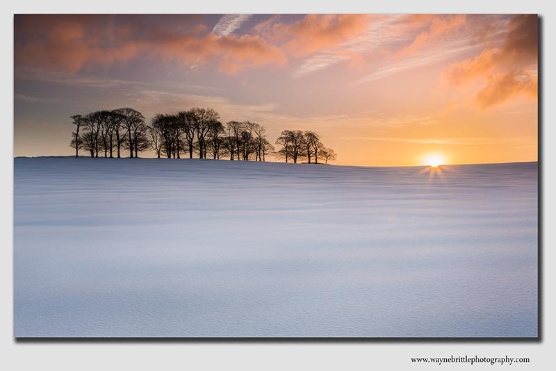 Snowy tree copse at dawn - 37997