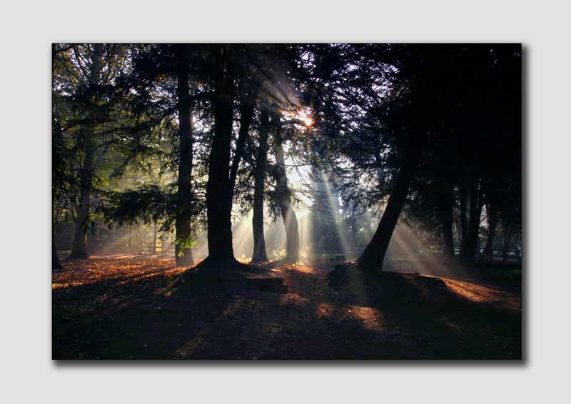 Sunrays, Elvaston Castle  -  DS015