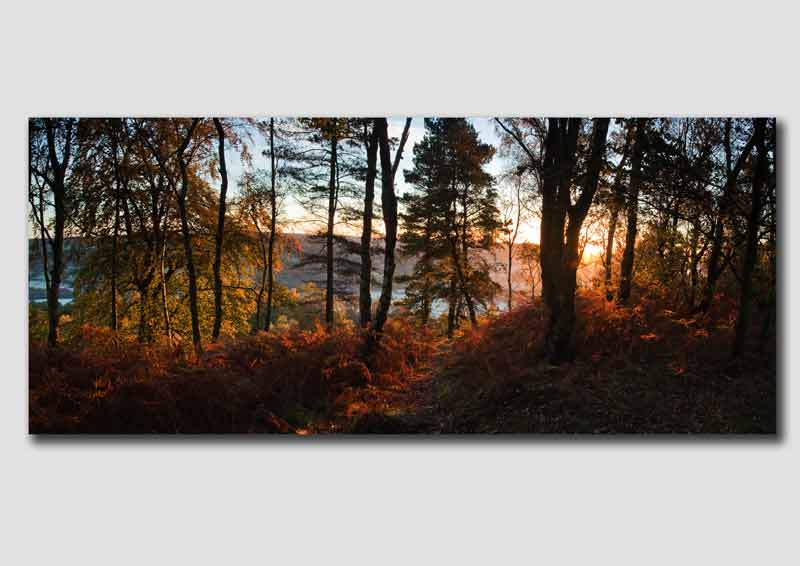 Sunrise on the edge of Stanton Moor -Panorama -  PP111