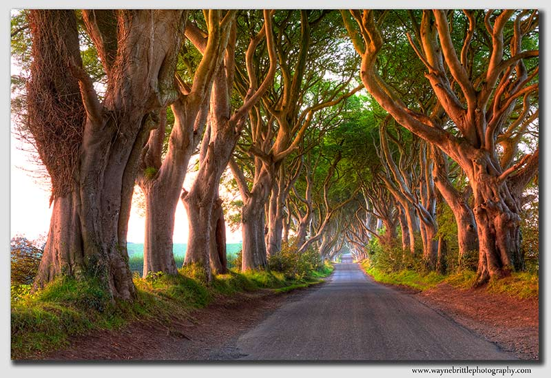 The-Dark-Hedges---HDR2----1k--W5D33749