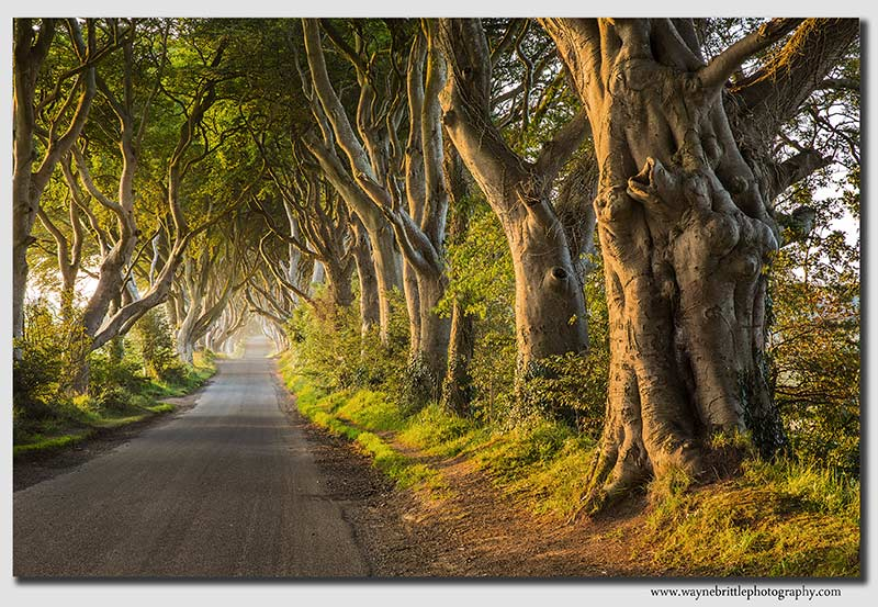 The-Dark-Hedges-Road----W5D33836