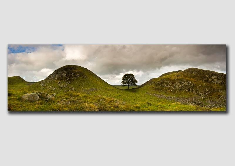 Sycamore Gap Panorama - Northumberland