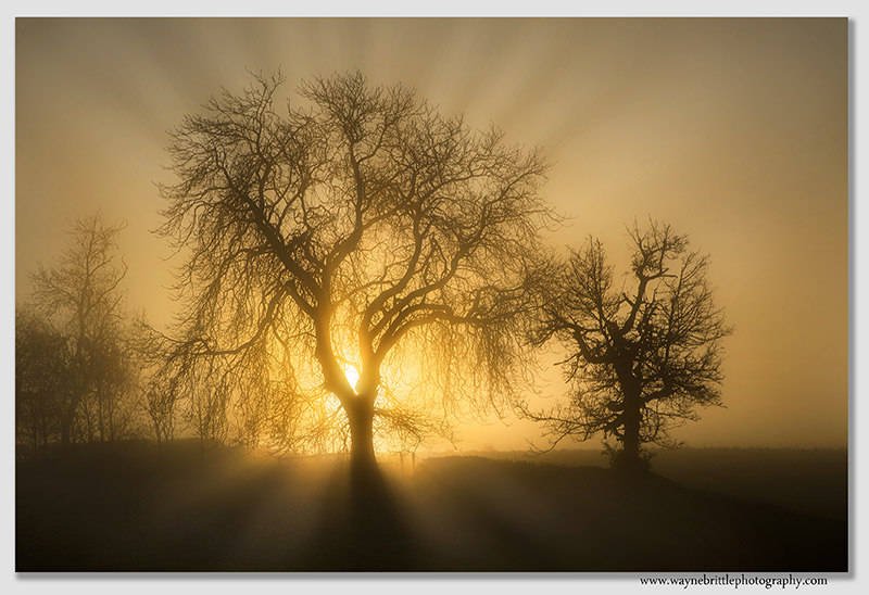 Tree in the mist and light v2