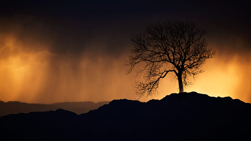 Tree in a storm