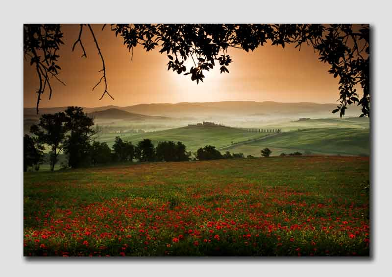 Tuscany Fields at Dawn-3 - TU1005