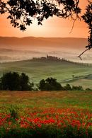 Tuscan Fields-4-TU1002
