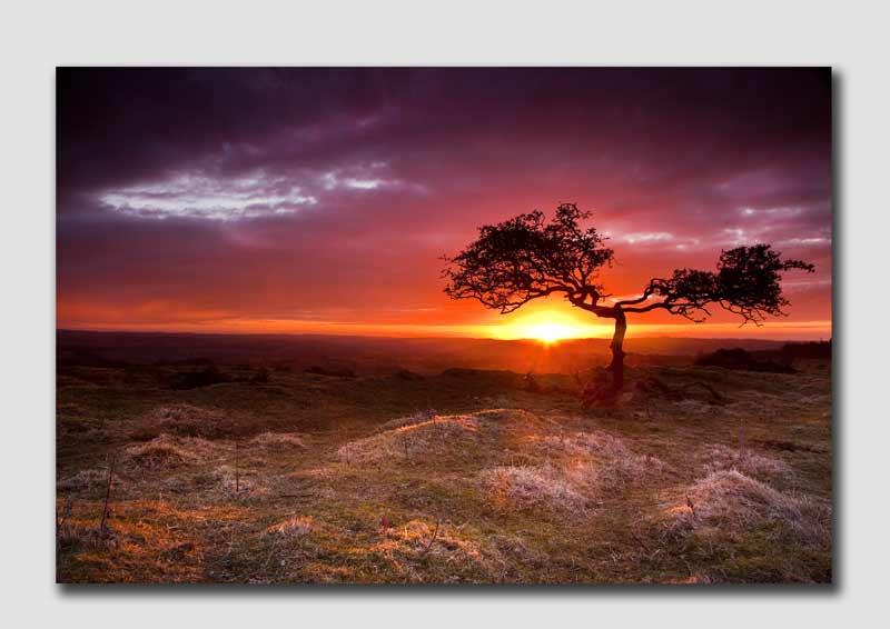 Brocalitia Sunrise - N4947