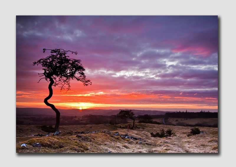 Twisted Tree at Sunrise - N4944