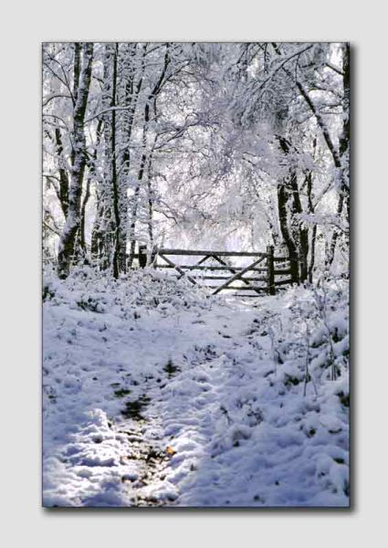Winters Gate - PS033