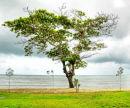 Tree, Holloways Beach