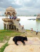 Jaisalmer - Lake pavilion