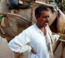 Karauli camel driver