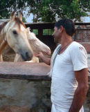 Karauli horses