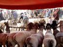 Sheep market - Kashgar