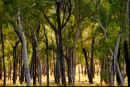 Lynd trees