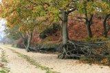 Wych Channel  -  Hartland Nature Reserve, Arne, Dorset
