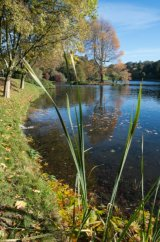 Reflections - Stourhead, Wiltshire