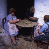 Almond Shelling - Mecina Fondales - Spain 1989
