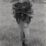 Child with banana leaves - Mityana - Uganda 1996
