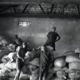 Convicts working in coffee factory - Uganda 1996